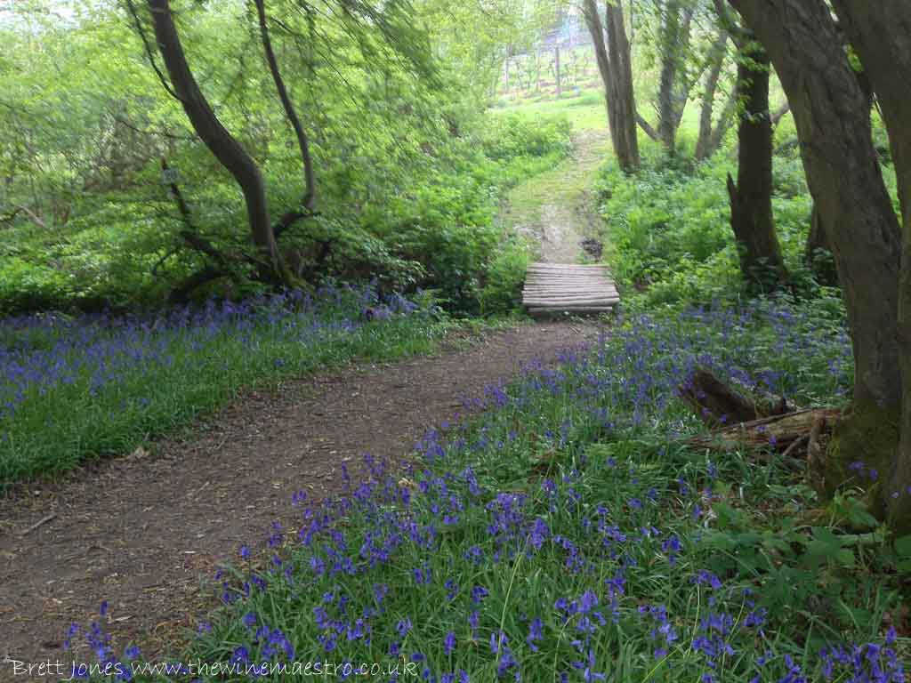 Bluebells at Sedlescombe