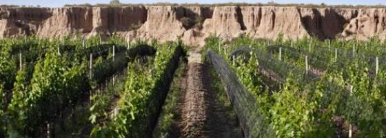 Barrancos vines in the canyon ©Wines of Argentina